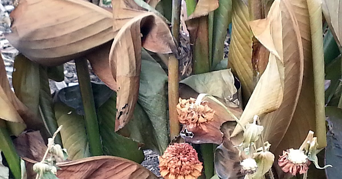 MaryHardingJewelry Bead Blog: After the Frost Before the Snow: Plants in Beautiful Decay